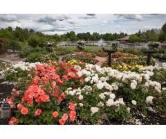 The 7 Best Bay Area Gardens